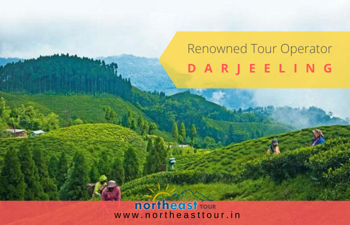 Tour operator in Darjeeling